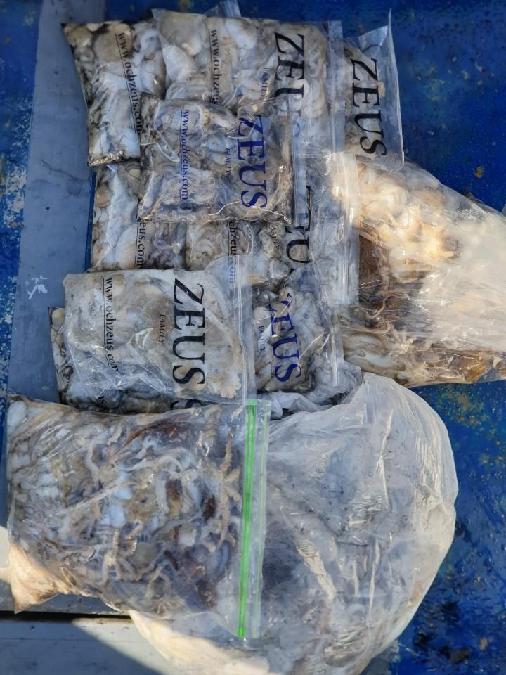 서해바다 대천항 제우스2호 10월 8일 쭈꾸미 조행기입니다