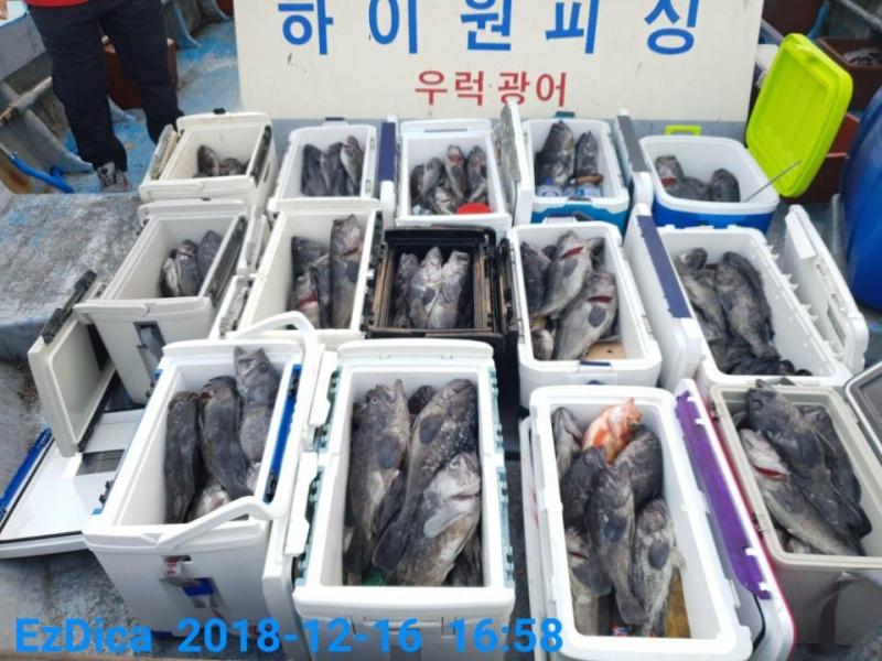 12월 16일 하이원호 5짜4짜 쓰리걸이 쌍걸이 조황입니다!!!