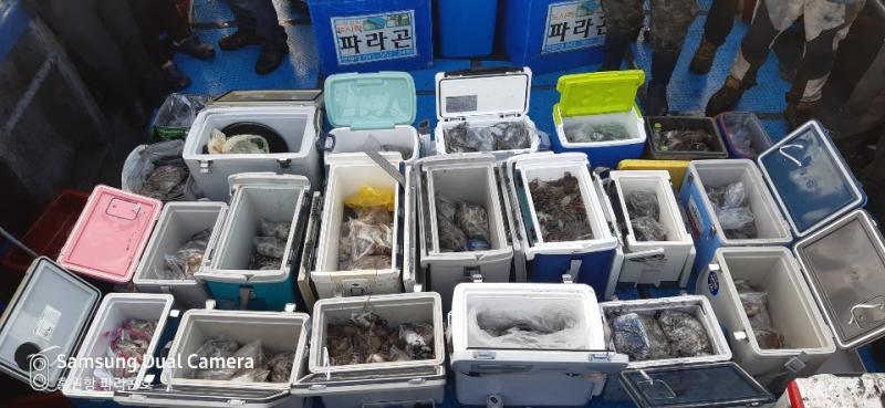 파라곤호 주꾸미 조황 ( 10월 18일 )