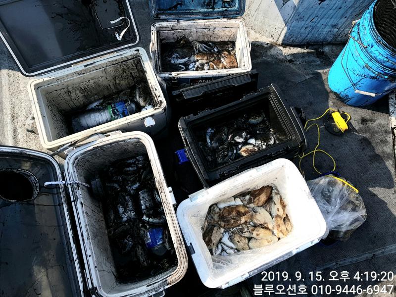 9월 15일 블루오션호 갑오징어 조황입니다.