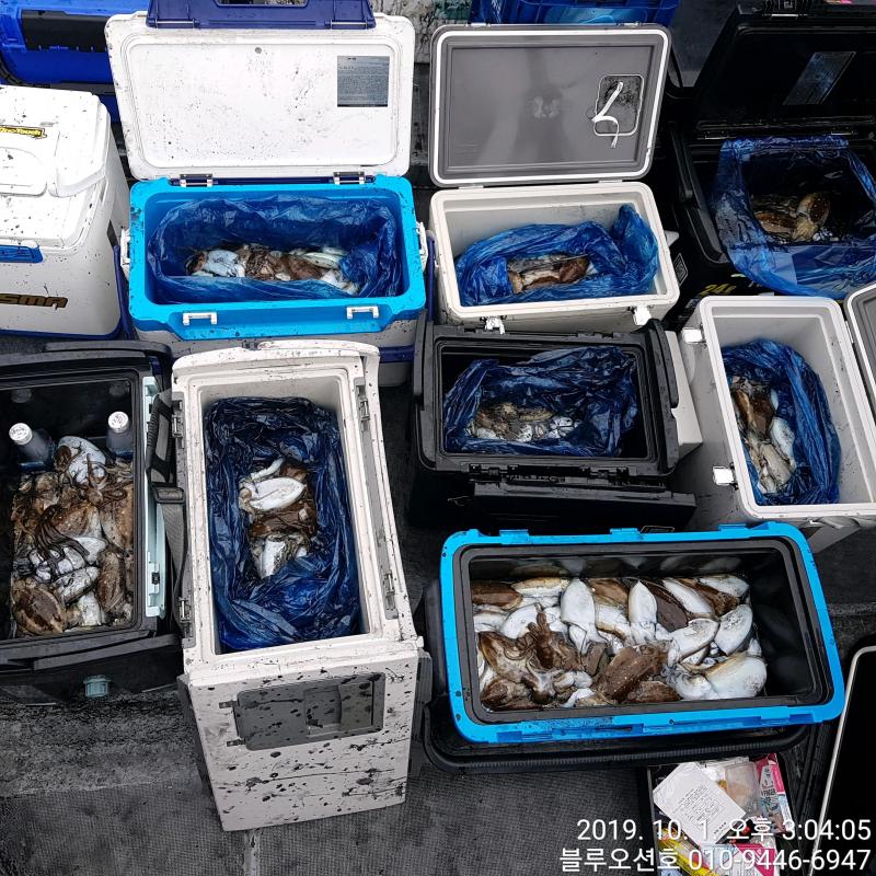 블루오션호 10월 1일 갑오징어 조황입니다.