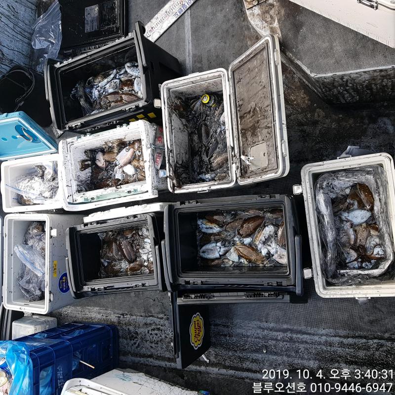 블루오션호 10월 4일 갑오징어 조황입니다.