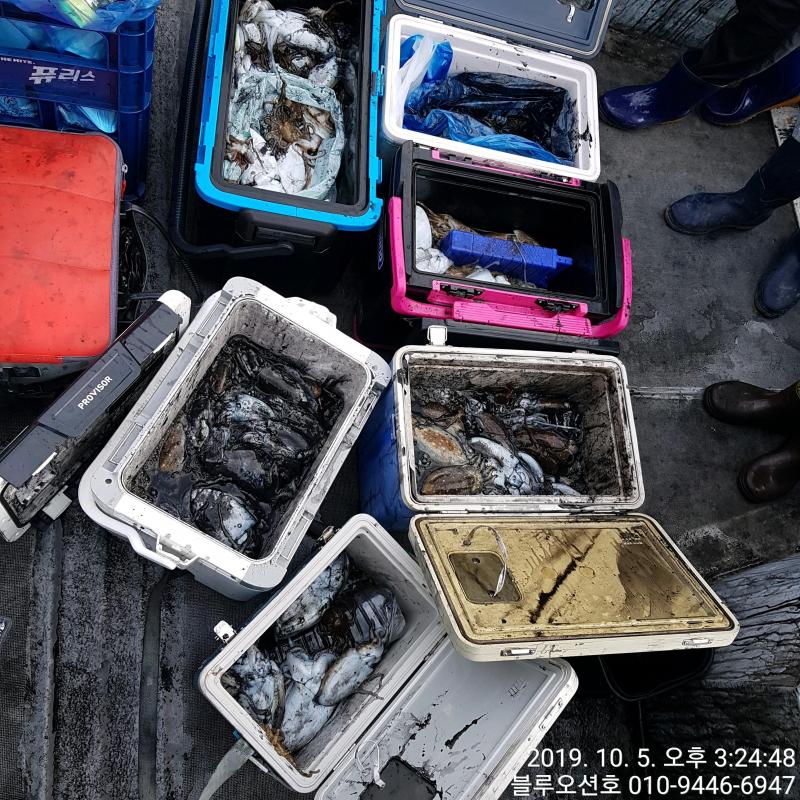 블루오션호 10월 5일 갑오징어 조황입니다.