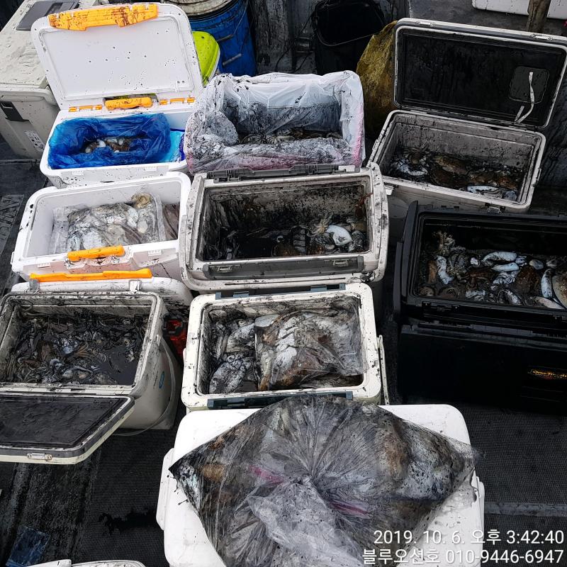 블루오션호 10월 6일 갑오징어 조황입니다.