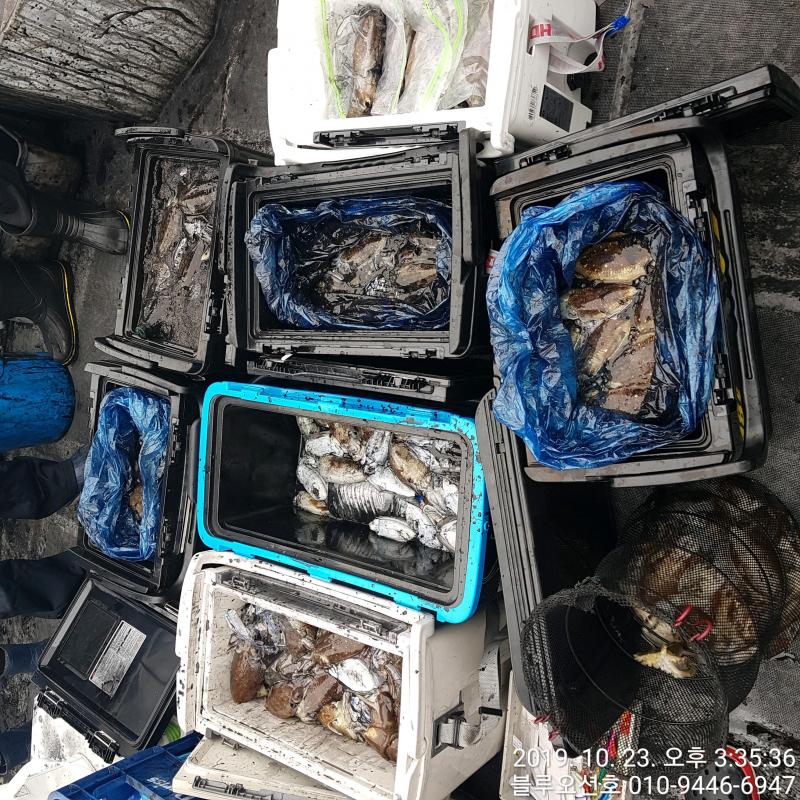 블루오션호 10월 23일 갑오징어 조황입니다.