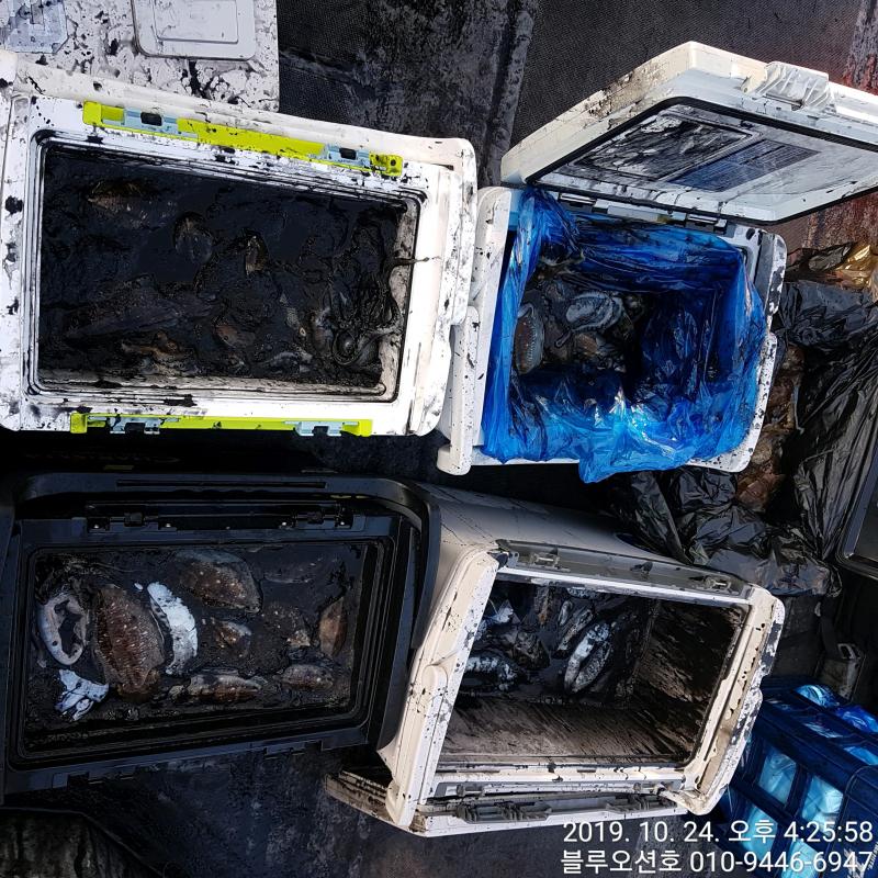 블루오션호 10월 24일 갑오징어 조황입니다.