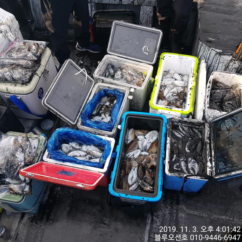 블루오션호 11월 3일 갑오징어 조황입니다.