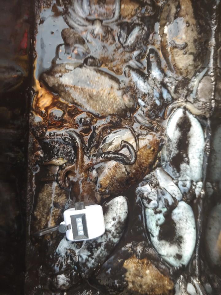 나폴리10.14갑오징어