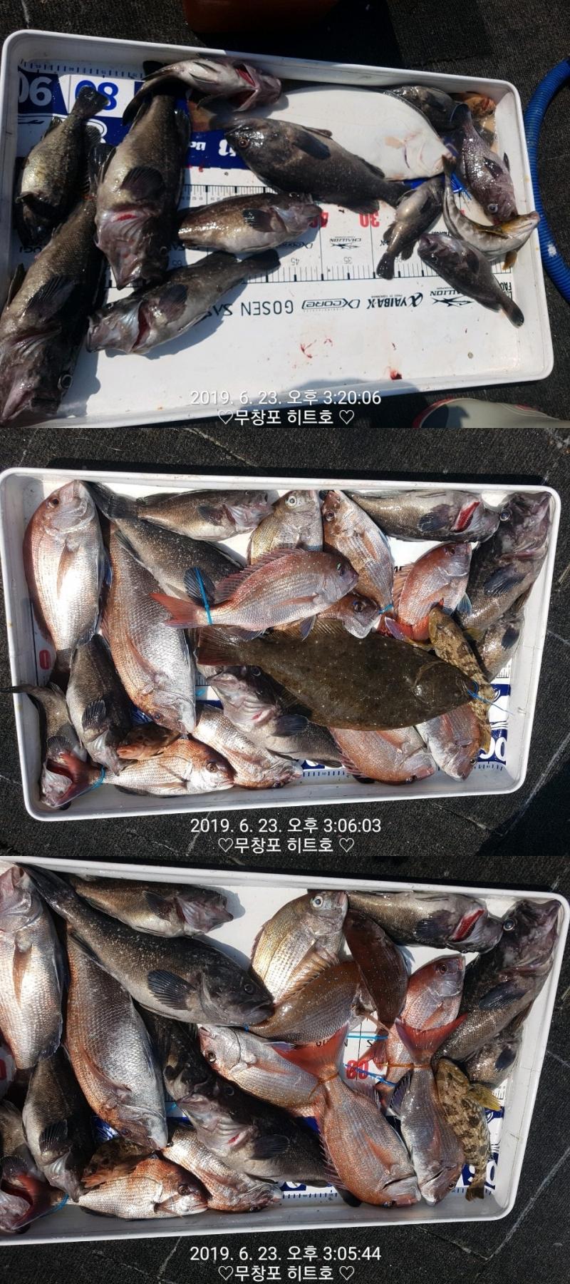 """""""히트호""""  6월23일 4人 참돔타이라바 조황입니다.."""