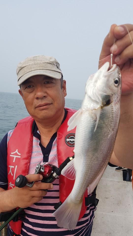 7.15 수지호 백조기 조황