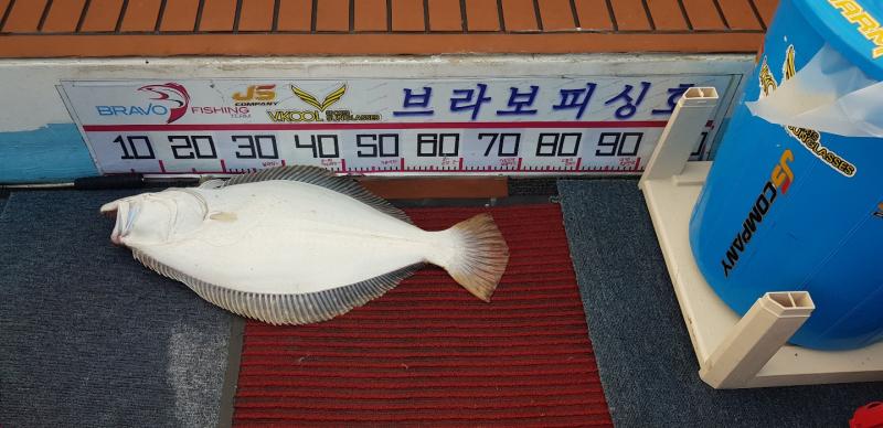 08/03 브라보피싱호 광어다운샷 조황