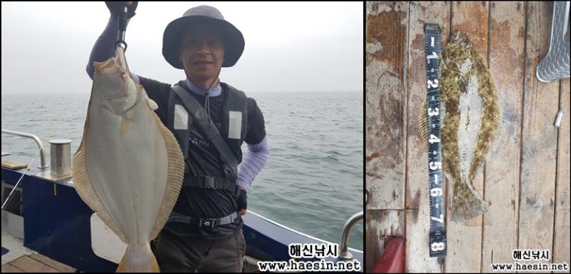 6월30일 격비도권 대광어조황