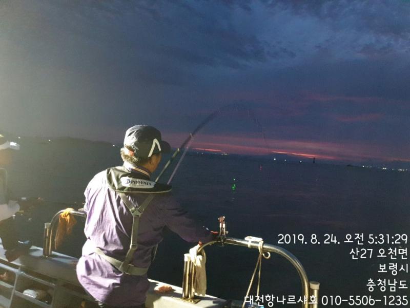 대천항나르샤호~~~~~~~~~~~8월24일 참돔찌낚시조황입니다