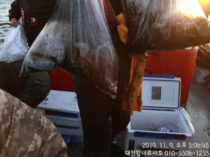 대천항 나르샤호~~~~~~~~~11월9일 갑오징어조황입니다