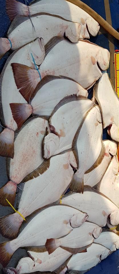 뉴써니호 8월3일 10분 모시고 대광어 사냥을 다녀왔습니다.