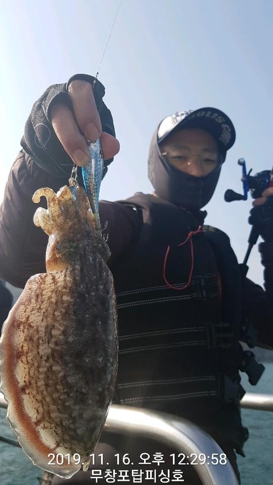 11월 16일 탑피싱호 갑오징어 출조 조황