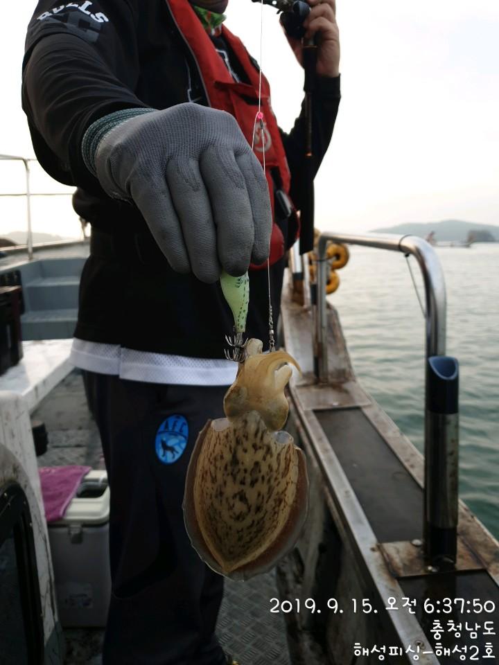 9월15일 해성2호 갑오징어 조황(막판뒤집기)