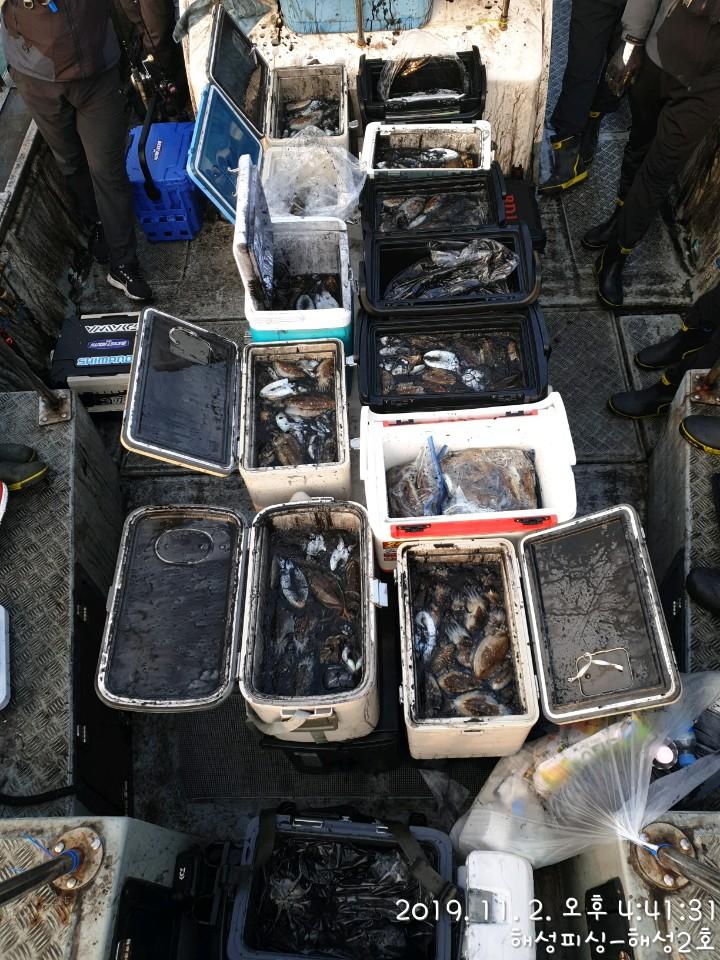 11월2일 해성2호 갑오징어 조황