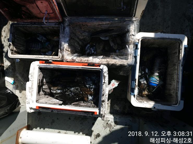 9월12일 해성2호 갑오징어 조황