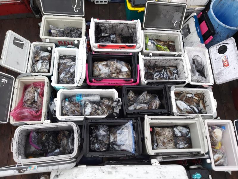 10월 6일 뉴아인스호 갑오징어 대박조황입니다.