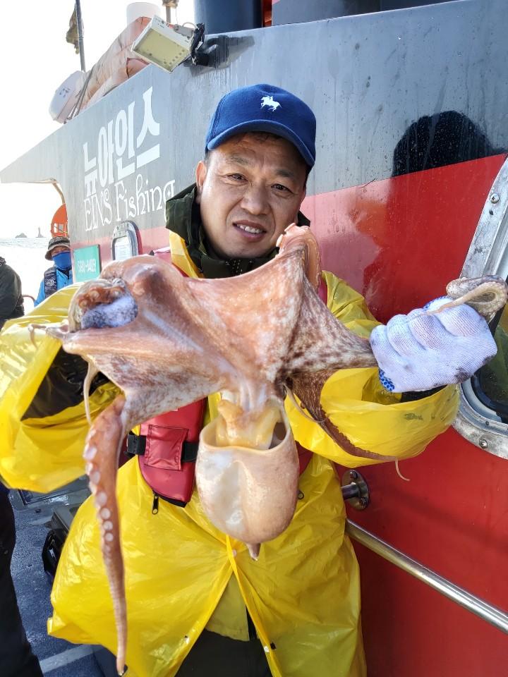 11월 4일 뉴아인스 갑오징어 만클조황입니다