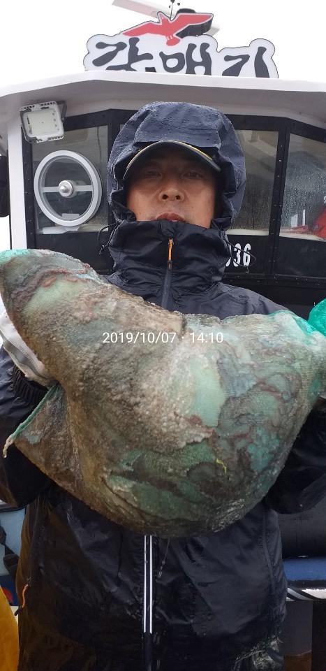 군산갈매기호 10월7일 문어출조. ㅡ 수중전 대박조황.