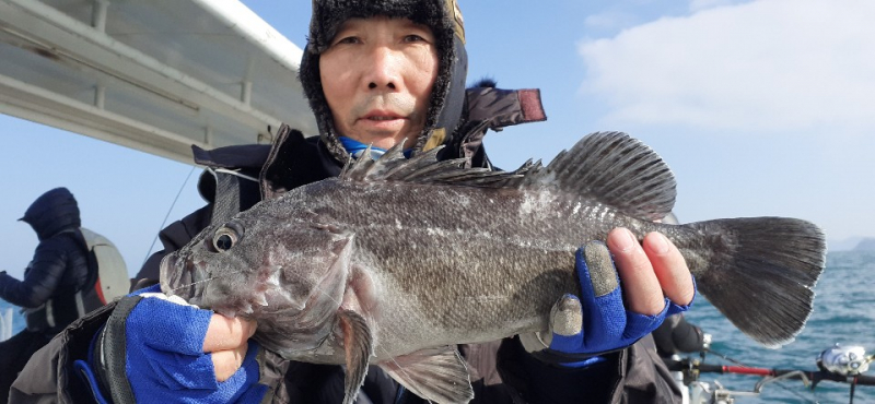 개우럭이 낚이는  겨울시즌~!  감사이벤트~ 참가자 전원에게 낚시대를~! 스마트호
