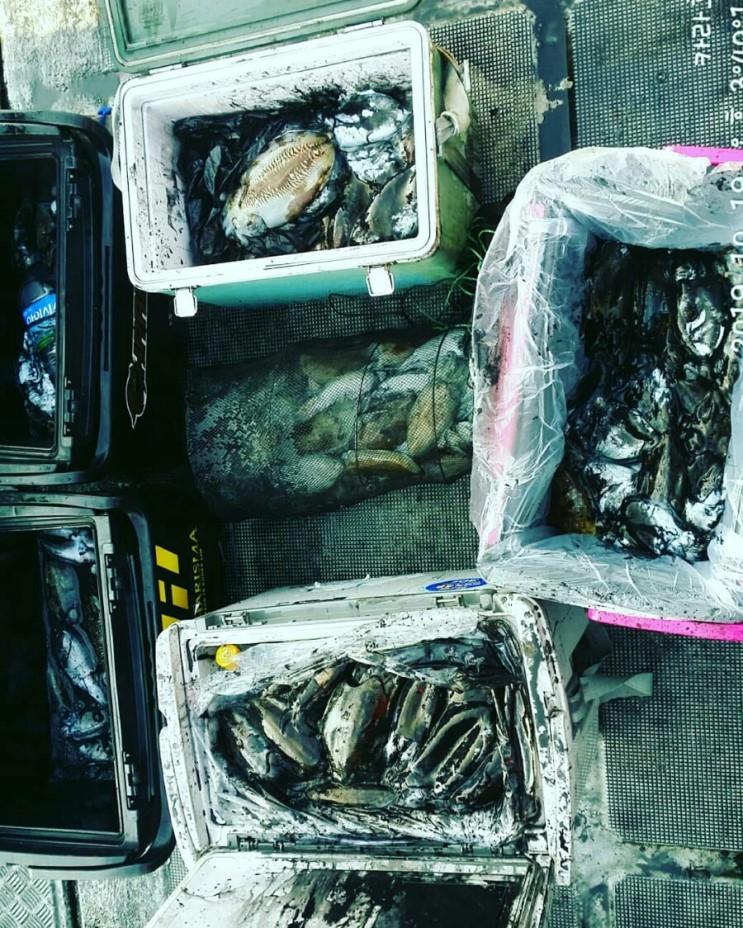 10월 19일 카라호 갑오징어 조황입니다.