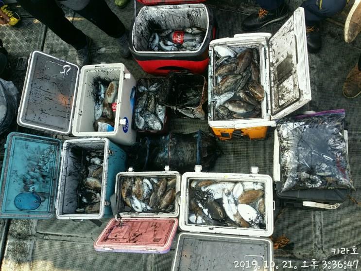10월 21일 카라호 갑오징어 조황입니다.