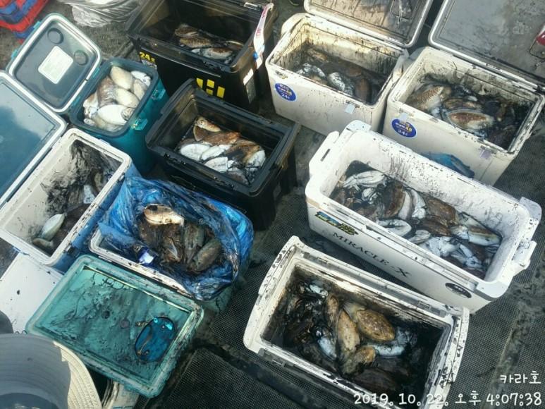 10월 22일 카라호 갑오징어 조황입니다.