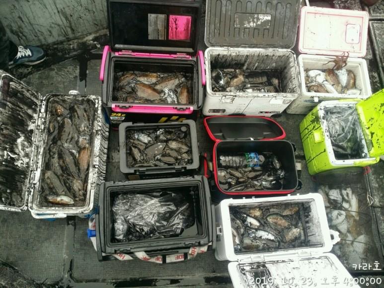 10월 23일 카라호  갑오징어 조황입니다.