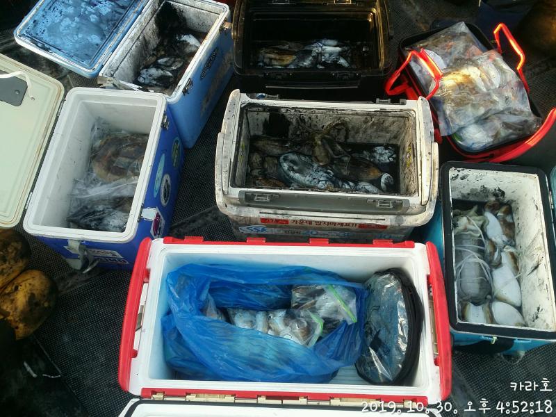 10월 30일 카라호 갑오징어 조황입니다.