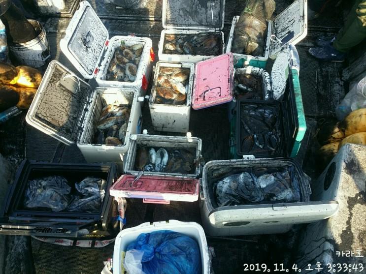 11월 4일 카라호 갑오징어 조황입니다.