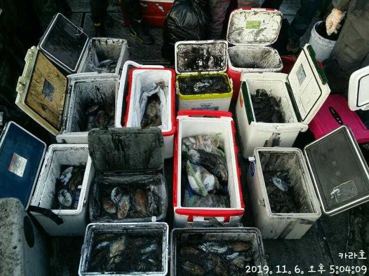11월 6일 카라호 갑오징어 조황입니다.