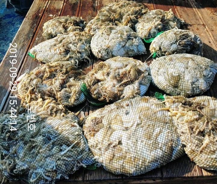 큰사리 7물때 쭈꾸미 나름 대박조황