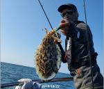 10월22일 갑오징어 조황 대운호