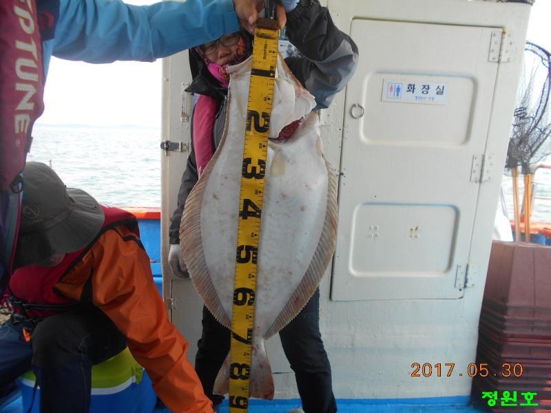 90cm급 대물광어 입니다. / 5월30일