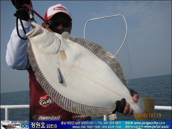 바다루어 다운샷 채비로 낚은 -광어- 사진동영상