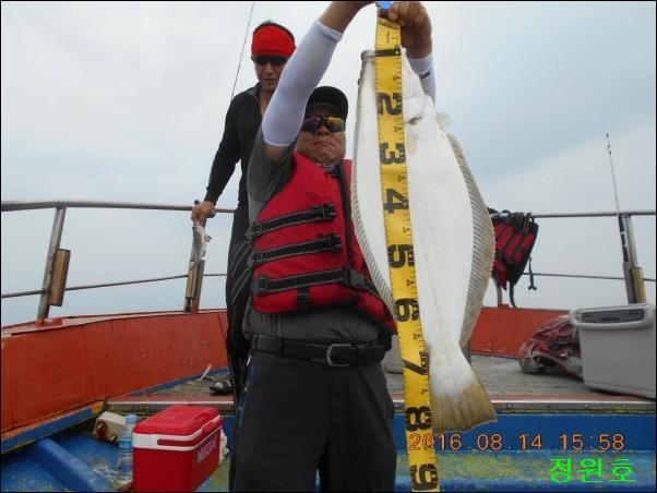 8월14일 80cm급 대광어 입니다.