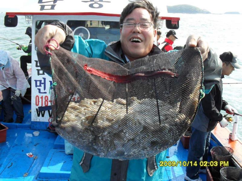 10월14일주꾸미&갑오징어왕대박조황소식